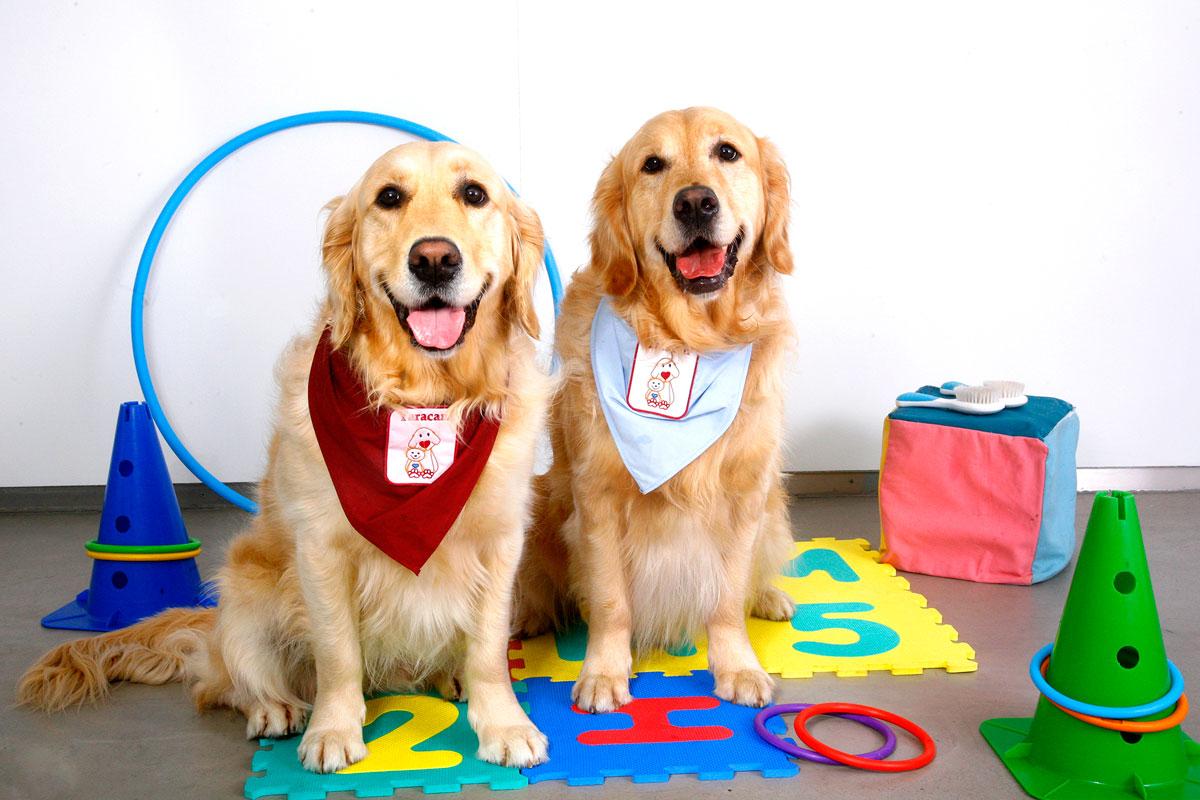 Obradoiros sobre Educación en Valores Asistidos por Cans de Terapia en Entornos Educativos