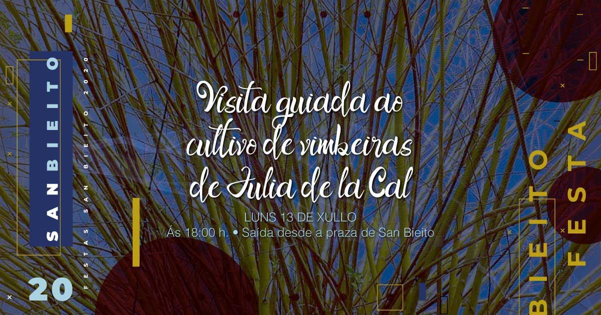 Visita guiada ao cultivo de vimbeiras de Julia de la Cal